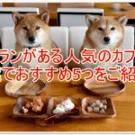 ドッグランがある人気のカフェは?千葉でおすすめのお店5つをご紹介!