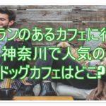 ドッグランのあるカフェに行こう!神奈川で人気のドッグカフェはどこ?