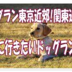 ドッグラン東京近郊!関東近郊の遊びに行きたいドッグラン4選!