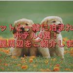 ペットと一緒に泊まれるホテル4選!名古屋周辺をご紹介します!