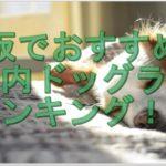ドッグランで遊ぼう!大阪でおすすめの室内ドッグランランキング!