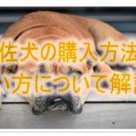 土佐犬のすすめ☆土佐犬の販売場所や値段を解説!土佐犬好きさん必見!